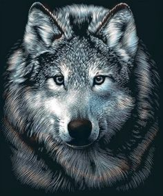STOP WOLF HUNTS: WOLF PETITIONS
