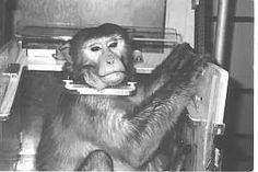 Blog : animals against vivisectors