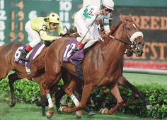 Soaring Softly(1995)Kris S.- Wings Of Grace By Key To The Mint. 3x4 To Princequillo. 16 Starts 9 Wins 1 Second 3 Thirds. $1,270,433. Won 1999 BC F&M Turf(G1), Flower Bowl Inv.(G1), New York H(G2), Sheepshead Bay H(G2). Champion Older Turf Female In U.S. In 1999. Sent To Ky. For Breeding In 2000. Died In Paddock Accident In 2015.