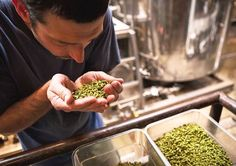 Smelling Hop Aroma Profiles