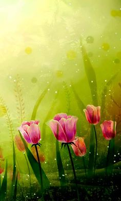 Download 480x800 «Delicate Tulips» Cell Phone Wallpaper. Category: Flowers