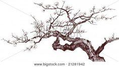 Immagini vettoriali e fotografiche d'archivio Illustrazione vettoriale di un ciliegio in fiore (disegno inchiostrato) | Bigstock