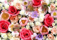 Encontre a alegria nas pequenas coisas da vida e faça seus dias serem muito mais felizes, florindo seu coração com muita positividade e bons sentimentos.#mensagenscomamo #celebrações #momentos #primavera