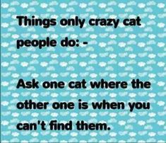 Things only crazy cat people do ask one cat where the other one is when you can't find them Crazy Cat Lady, Crazy Cats, Animals Are Beautiful People, Cat Attack, Cat Info, Mama Cat, All About Cats, Cat People, Grumpy Cat