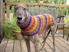 Side Button Greyhound Sweater - now just need the greyhound!