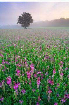 'Sainfoin meadow I'