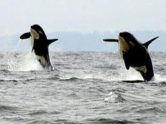 Orcas Island, Washington.