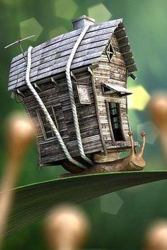 Old Farm House Snail