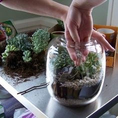 a succulent terrarium how-to