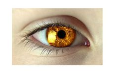 Golden eyes, irises like the sun.