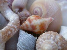 Seashells found on Lido Beach, Florida