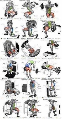 Perna ( quadríceps, bíceps femural, adutor e abdutor) (Fitness Workouts Abs) Fitness Man, Muscle Fitness, Health Fitness, Muscle Nutrition, Planet Fitness, Fitness Workouts, Fitness Tips, Body Workouts, Fitness Foods