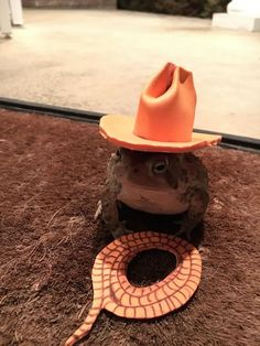 Frog Discover Very nice man creates tiny hats for a toad that visits his doorstep every night. Very nice man creates hats for a toad who visits his doorstep each night. A cute lil cowboy toad. Baby Animals, Funny Animals, Cute Animals, Sapo Meme, Terrarium Reptile, Photographie Indie, Frog Pictures, Cute Frogs, Frog And Toad