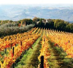 photos of vineyards - Yahoo Search Results