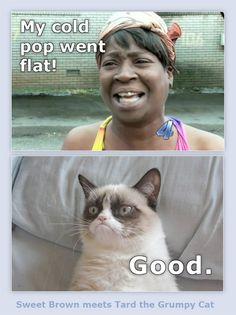 Sweet Brown meets Tard the Grumpy Cat #GrumpyCat #Tard #TardarSauce