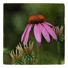 Purple Cone Flower Trivet