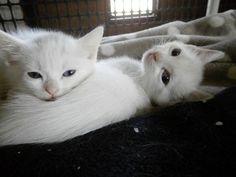 Maman chat et ses bébés identiques sont abandonnés C trop triste,moi je les adopteraient c sur et certain!!!!!