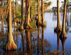 Picturesque Louisiana swampland