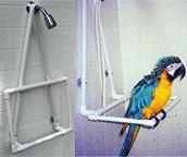 PVC Shower Head Hanging Bath Perch for Parrots & Pet Birds at Roses Pet (Jouet Pour Perroquet) Diy Parrot Toys, Diy Bird Toys, Parrot Perch Diy, Diy Macaw Toys, Parrot Stand, Bird Stand, Bird Aviary, Bird Perch, Homemade Bird Toys