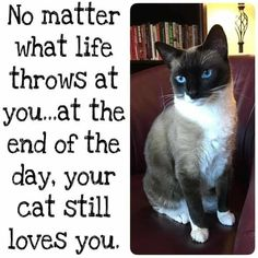 Silly Cats, Cats And Kittens, Cute Cats, Animal Humour, Animal Quotes, Crazy Cat Lady, Crazy Cats, Beautiful Cats, Animals Beautiful