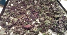 Raw kale chips dehydrator recipe • The Raw Food World News