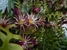 cactáceas tipos | tipos de cactus en mexico | Cuidar de tus plantas es facilisimo.com