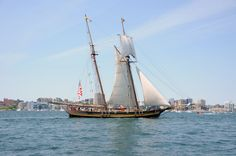 Parade of Sail - Pride of Baltimore