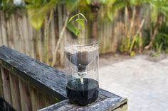 How to Make a Hydroponics System with a Two-Liter Bottle