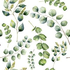 Watercolor pattern with eucalyptus. Hand painted floral ornament with silver dollar, seeded and baby eucalyptus branches isolated on white background. For fabric, print or design , Watercolor Leaves, Watercolor Pattern, Watercolour, Eucalyptus Branches, Shades Of Violet, Silver Dollar, Background Images, Royalty Free Images, Pattern Design
