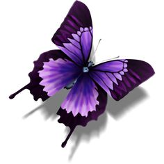 Purple+Butterfly | Similar icons with these tags: butterfly animal other package mail