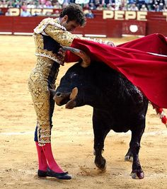 """Spanish-style bullfighting is called a corrida de toros (literally a """"running of bulls""""), or fiesta brava[citation needed] and is practiced in Spain and Mexico, Colombia, Ecuador, Venezuela, Peru, as well as in Southern France. In traditional corrida, three toreros, also called matadores or, in French, toréadors, each fight two out of a total of six fighting bulls, each of which is at least four years old and weighs up to about 600 kg or 1,300 lb (with a minimum weight limit of 460 kg or…"""