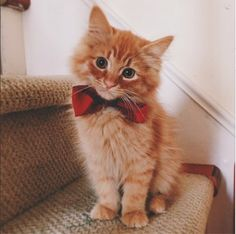 pupsporn - kitty with necktie
