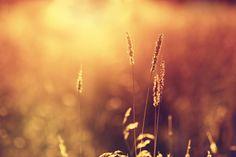 Sun light by Vladimir Bolshakov on 500px