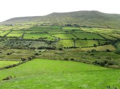 dingle ireland - there are really 40 shades of green or more, you wouldn't believe.....