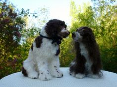 Wigglebutt Wedding, Designer Dog Miniatures