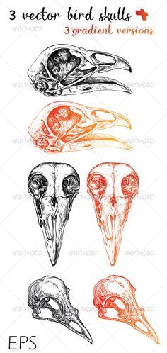 3 Vector Bird Skulls + 3 Gradient Versions Ink