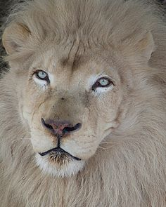 ˚He is King of the Jungle (by photofest2009 - Kathy Newton)