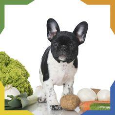 ¿Sabías que? Estas verduras son buenas para los perros: apio, papas, chayote, espinaca, espárragos, brócoli, chícharos, zanahoria, calabaza, lechuga.