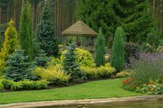 Хвойные композиции в ландшафтном дизайне. Выбираем растения!