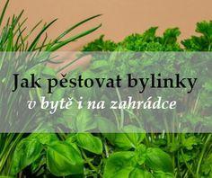 Návod, jak si vyložit tarotové karty Pesto, Herbs, Plants, Herb, Plant, Planets, Medicinal Plants