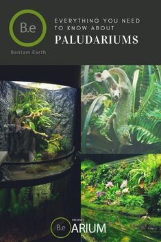 A step-by-step paludarium care guide. Learn about paludaria and how to build and maintain one. DIY paludariums for various plants & animals. Diy Aquarium, Planted Aquarium, Aquarium Ideas, Aquarium Garden, Planting Roses, Planting Succulents, Ferns Care, Types Of Ferns, Succulent Terrarium
