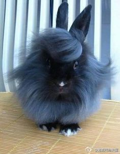 This bunny is having a better hair day than me!