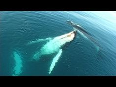 Songlines of the Whales