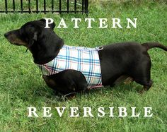 Small dog harness vest dachshund adjustable by WarmWeenies on Etsy