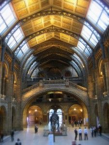 Inside the London Museum of Natural History at the Dinosaur Hall
