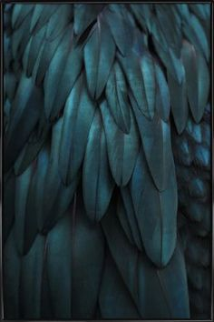 Dark Feathers - Monika Strigel - Poster in kunststof lijst