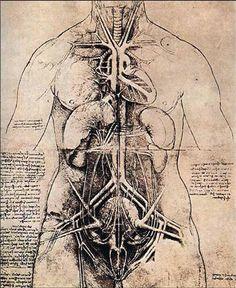 http://www.leonardo-da-vinci-biography.com/images/leonardo-da-vinci-anatomy.5.jpg The Great Lady... Anatomy drawings.