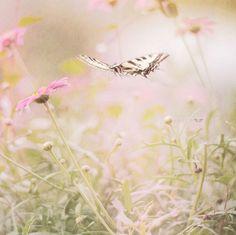 Fleurs sauvages et papillon