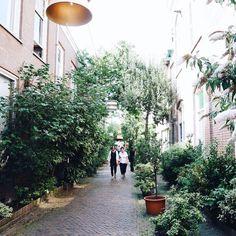 Het groenste straatje van Haarlem  #kortehoutstraat #haarlem #haarlemcityblog