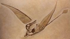 Fossil - Rhamphorhynchus